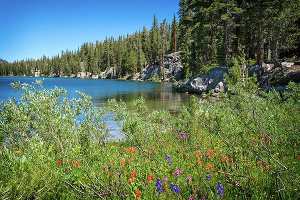 Photograph - Mixed Wildflowers At T.j. Lake by Lynn Bauer