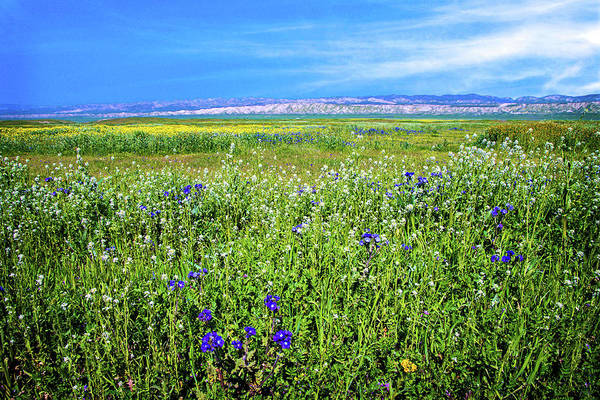 Photograph - Mixed Wildflowers On The Carrizo Plain by Lynn Bauer