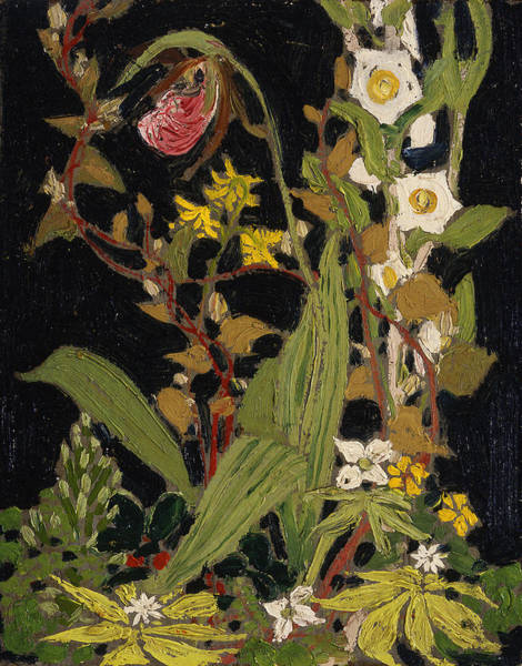 Painting - Moccasin Flower  by Tom Thomson