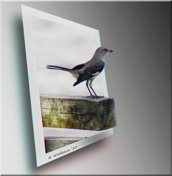 Anaglyph Photograph - Mockingbird - Use Red-cyan 3d Glasses by Brian Wallace