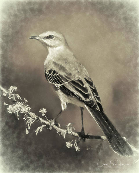 Wall Art - Digital Art - Mockingbird by Carol Fox Henrichs