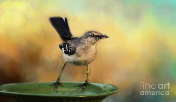 Wildbird Photograph - Mockingbird by Darren Fisher