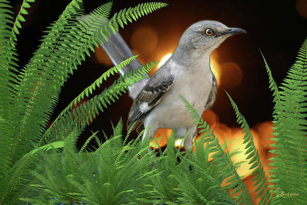 Photograph - Mockingbird In The Ferns by Ericamaxine Price
