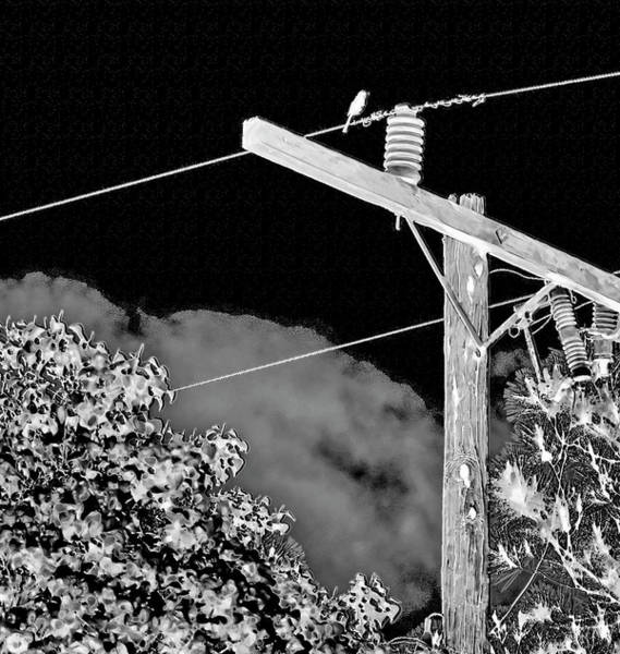 Photograph - Mockingbird On A Wire by Gina O'Brien