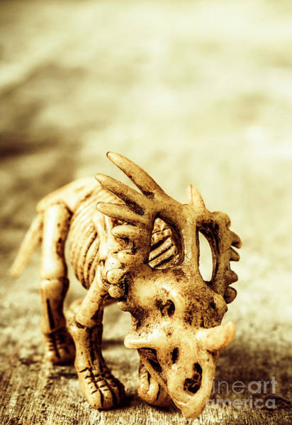 Bone Photograph - Model Styracosaurus Skeleton by Jorgo Photography - Wall Art Gallery