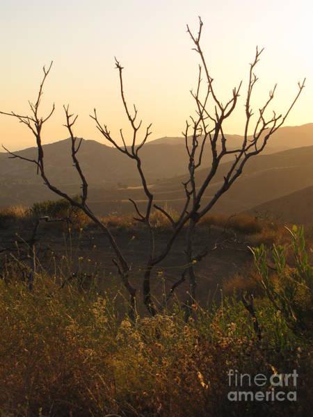 El Toro Photograph - Modjeska At Sunset by Rachel Partin