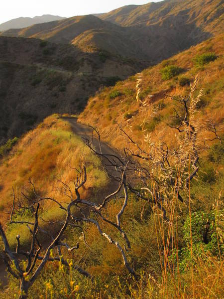 El Toro Photograph - Modjeska Canyon  by Rachel Partin
