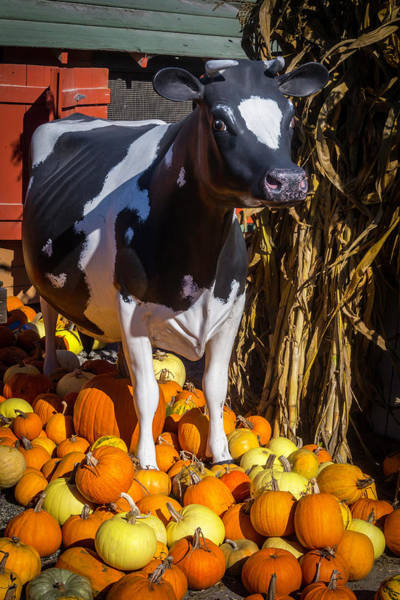 Wall Art - Photograph - Model Cow And Pumpkins by Garry Gay