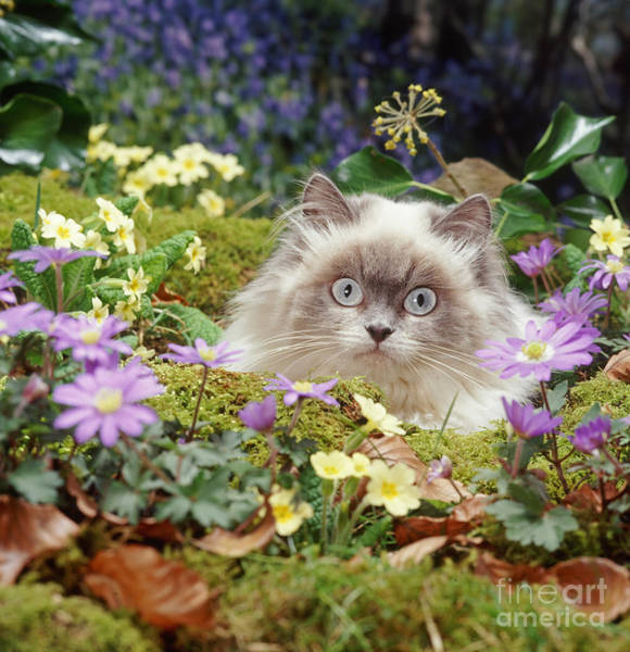Photograph - Moggy In The Moss by Warren Photographic