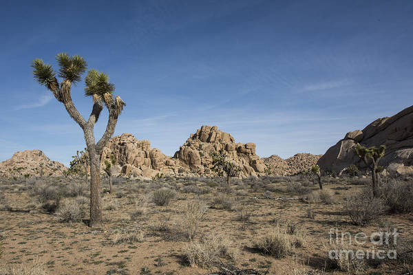 Photograph - Mohave Desert by Juli Scalzi