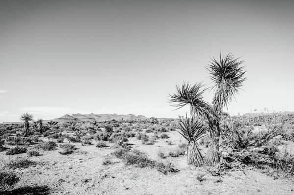 Photograph - Mojave National Preserve No.4 Monochrome by Margaret Pitcher