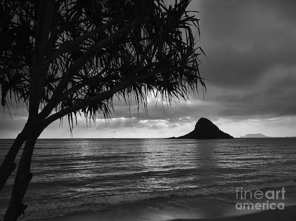 Mokolii Photograph - Mokolii And Hala Tree by John De Mello