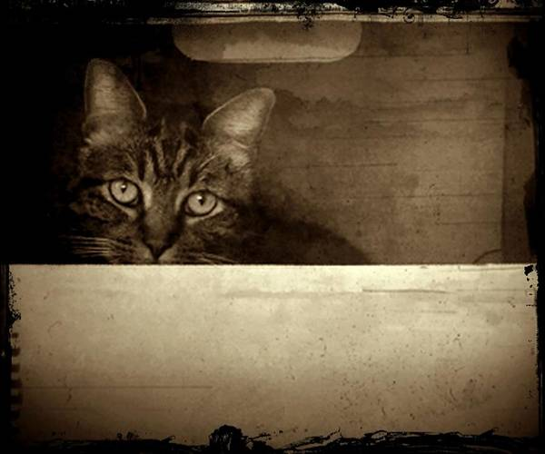 Photograph - Mollie In A Box by Patricia Strand