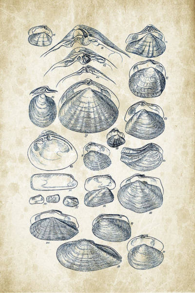 Invertebrate Wall Art - Digital Art - Mollusks - 1842 - 04 by Aged Pixel