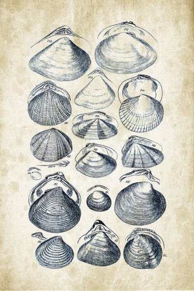 Invertebrate Wall Art - Digital Art - Mollusks - 1842 - 05 by Aged Pixel