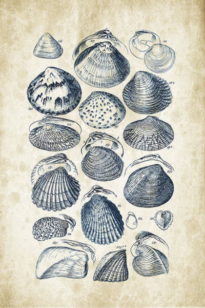 Wall Art - Digital Art - Mollusks - 1842 - 06 by Aged Pixel
