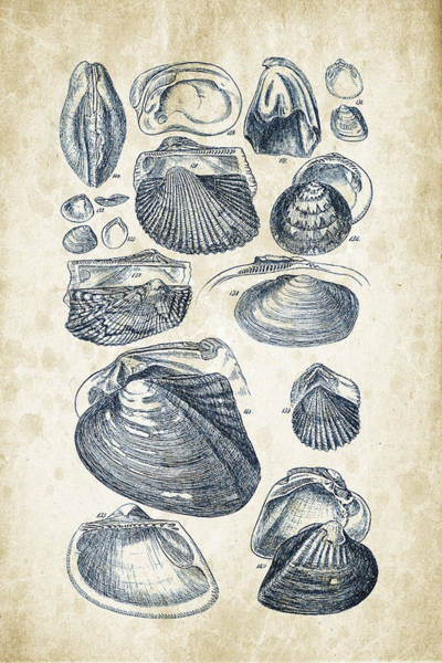 Invertebrate Wall Art - Digital Art - Mollusks - 1842 - 07 by Aged Pixel