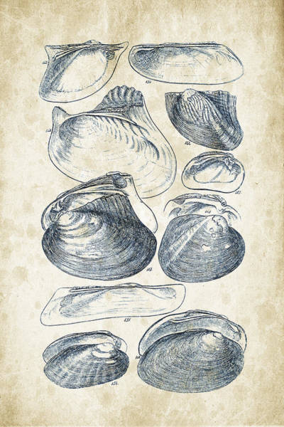 Invertebrate Wall Art - Digital Art - Mollusks - 1842 - 08 by Aged Pixel
