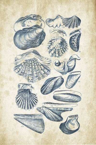 Wall Art - Digital Art - Mollusks - 1842 - 09 by Aged Pixel