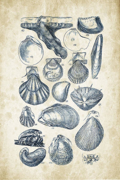 Invertebrate Wall Art - Digital Art - Mollusks - 1842 - 10 by Aged Pixel