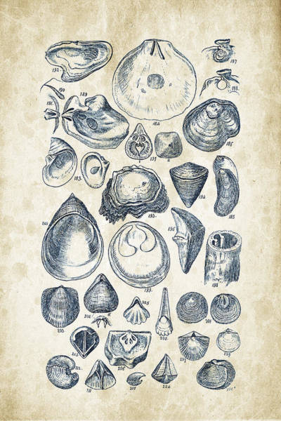 Invertebrate Wall Art - Digital Art - Mollusks - 1842 - 11 by Aged Pixel