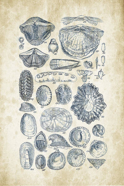 Invertebrate Wall Art - Digital Art - Mollusks - 1842 - 12 by Aged Pixel