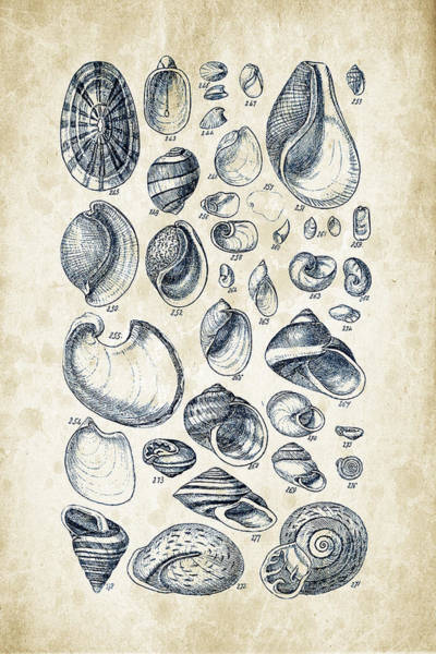 Invertebrate Wall Art - Digital Art - Mollusks - 1842 - 13 by Aged Pixel