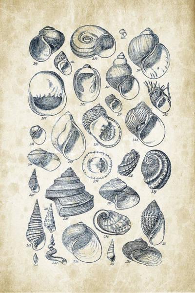 Wall Art - Digital Art - Mollusks - 1842 - 15 by Aged Pixel