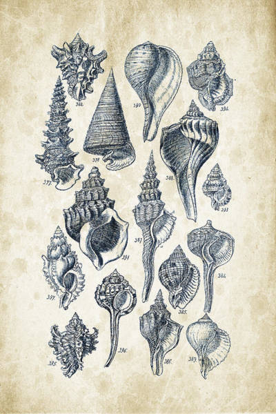 Wall Art - Digital Art - Mollusks - 1842 - 17 by Aged Pixel