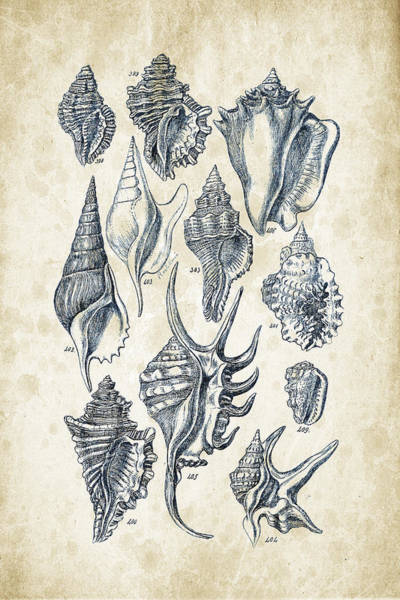 Invertebrate Wall Art - Digital Art - Mollusks - 1842 - 18 by Aged Pixel