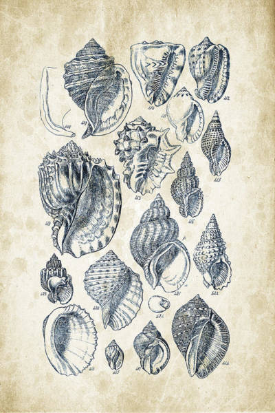 Invertebrate Wall Art - Digital Art - Mollusks - 1842 - 19 by Aged Pixel