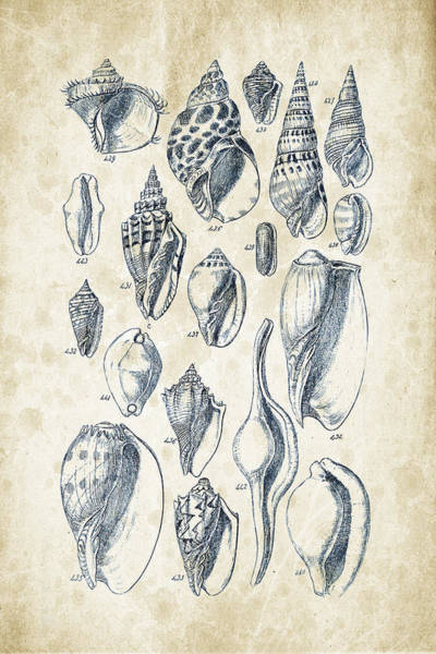 Wall Art - Digital Art - Mollusks - 1842 - 20 by Aged Pixel