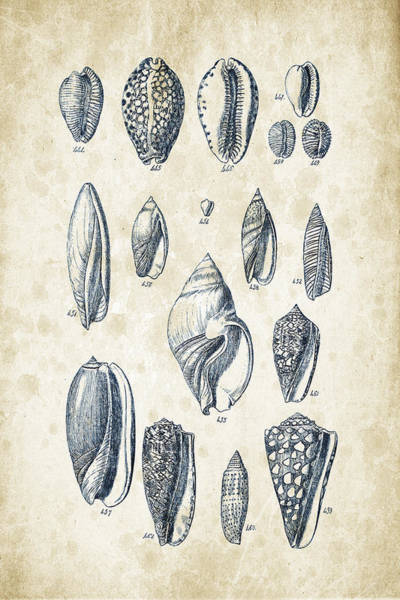 Invertebrate Wall Art - Digital Art - Mollusks - 1842 - 21 by Aged Pixel