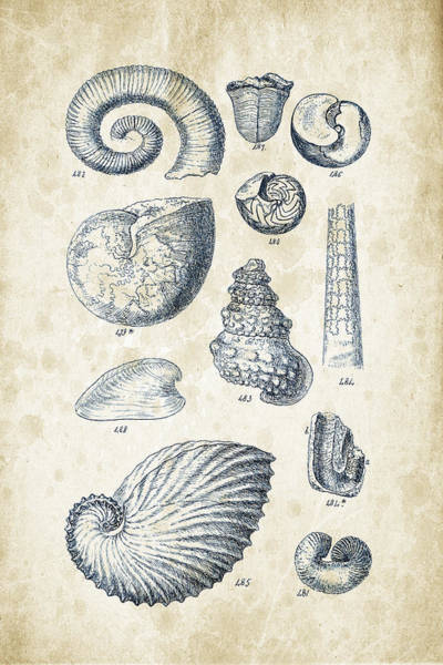 Invertebrate Wall Art - Digital Art - Mollusks - 1842 - 23 by Aged Pixel