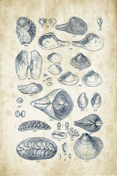 Invertebrate Wall Art - Digital Art - Mollusks - 1842 - 24 by Aged Pixel