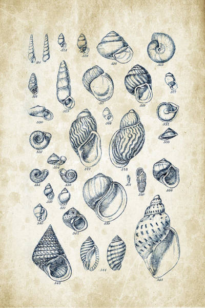 Invertebrate Wall Art - Digital Art - Mollusks - 1842 - 25 by Aged Pixel