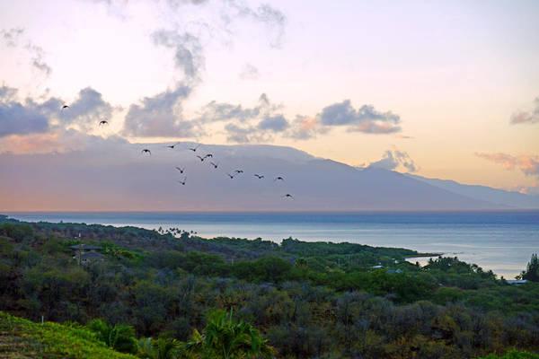 Wall Art - Photograph - Molokai Dawn Birds by Kevin Smith