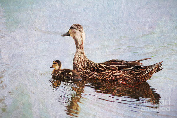 Photograph - Mom And Little One by Deborah Benoit