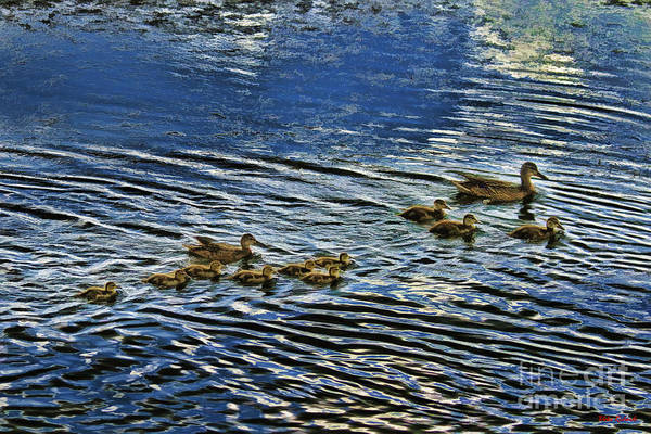 Photograph - Mom Dad And Their Ten Baby Ducks by Blake Richards