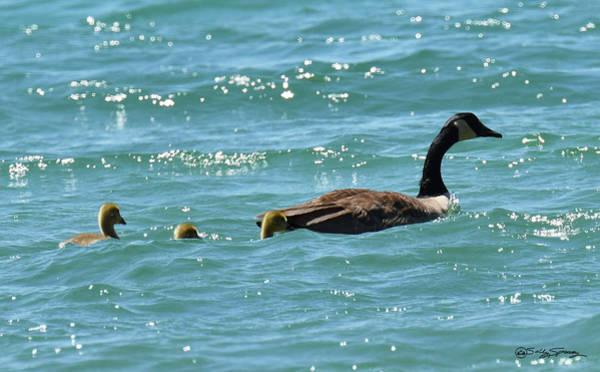 Photograph - Mom, I Think There Is A Small Craft Warning by Sally Sperry