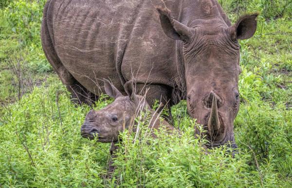 Wall Art - Photograph - Mommy And Baby Rhino by Cindi Alvarado