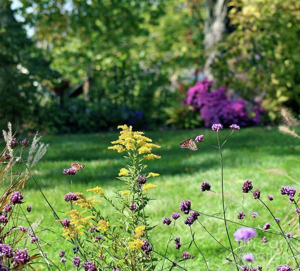 Photograph - Monarch And Buckeye Butterflies 2011 by Karen Adams