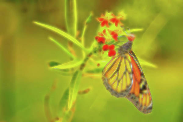 Photograph - Monarch Butterfly Abstract 3 by Kay Brewer