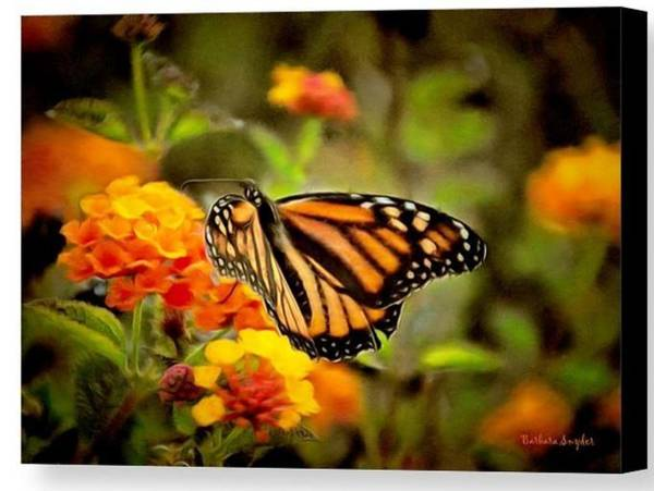 Photograph - Monarch Butterfly Grove Special by Barbara Snyder