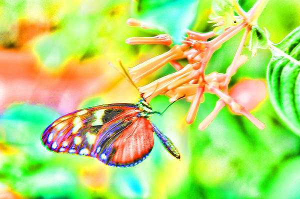 Photograph - Monarch Butterfly Hdr by Lawrence Christopher