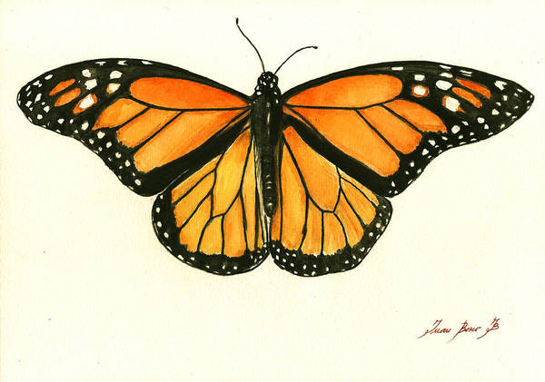Butterfly Wall Art - Painting - Monarch Butterfly by Juan Bosco