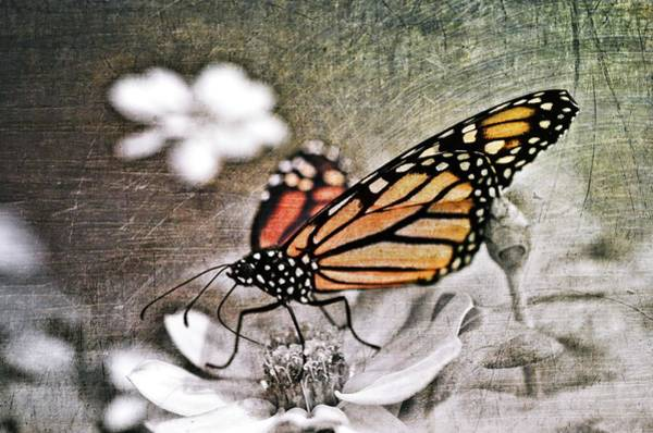 Soul Photograph - Monarch Butterfly by Marianna Mills
