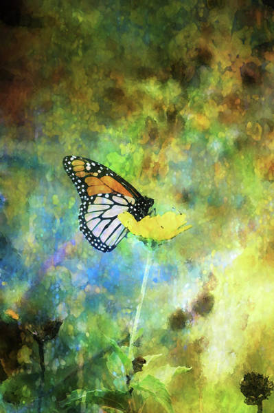 Monarch In Azure And Gold 5647 Idp_2 Art Print