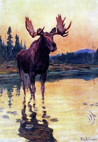 Painting - Monarch Of The North by Philip R Goodwin