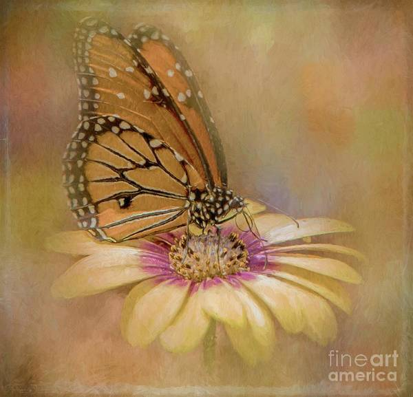 Monarch On A Daisy Mum Art Print